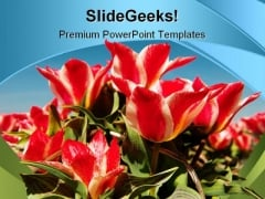 Tulips Beauty PowerPoint Backgrounds And Templates 0111