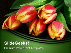 Tulips Nature PowerPoint Templates And PowerPoint Backgrounds 0211