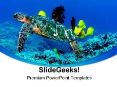 Turtle Animal PowerPoint Template 0910