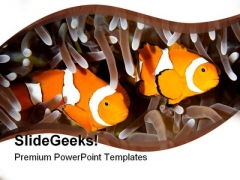 Two Clown Fishes Animals PowerPoint Templates And PowerPoint Backgrounds 0211