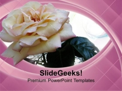 White Rose Is Symbol Of Peace PowerPoint Templates Ppt Backgrounds For Slides 0613