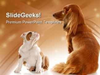bull dog puppy and dachshund animals powerpoint templates and, Modern powerpoint