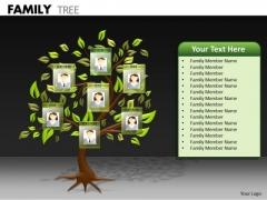 Business Framework Model Family Tree Business Finance Strategy Development